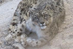 Snow Leopard Trek 2019-2020