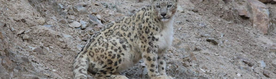 SNOW LEOPARD TREK  2020